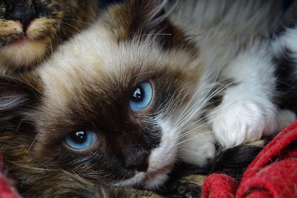 Galileu, o gatinho que ganhou o nome por causa da revista (Foto: Divulgação/ Catland )