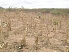 Tempo seco castiga agricultores do CE, que ficam sem água até para beber