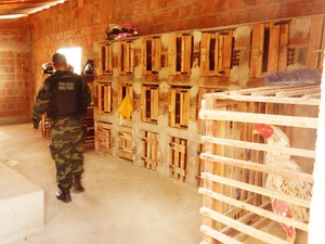 Polícia Militar esteve no sítio onde funcionava a rinha e deteve um suspeito de maus-tratos (Foto: Divulgação/Polícia Militar da Paraíba)