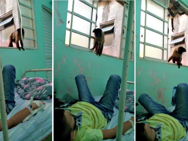 Macacos visitam pacientes em hospital no Mato Grosso do Sul (Foto: Divulgação)