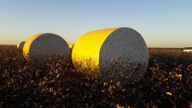 algodao-el-tejar-primavera-do-leste (Foto: Raphael Salomão/Ed. Globo)