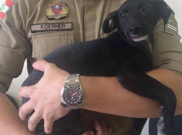 Cãozinho foi acolhido em quartel da PM em Porto União (Foto: Divulgação)