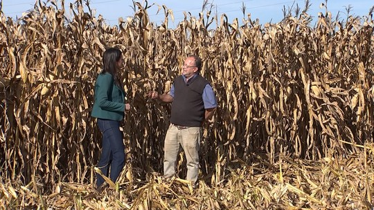 Produção de milho safrinha deve bater recorde no Sudoeste de São Paulo