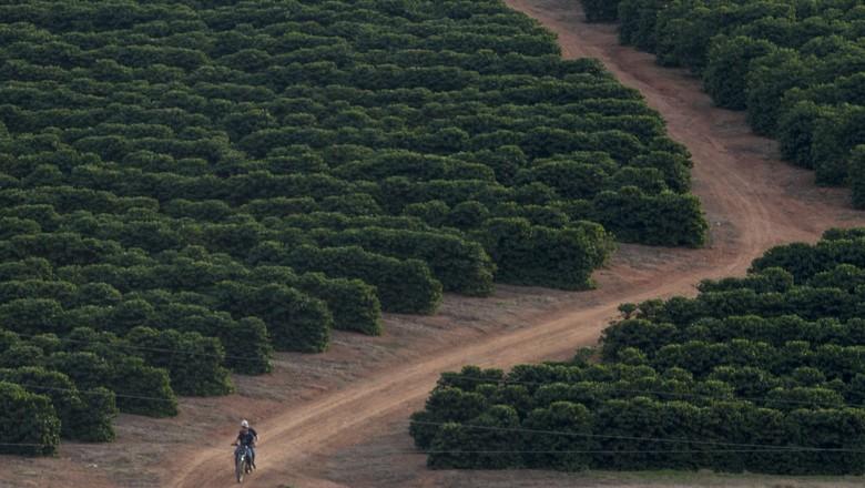 plantação_café (Foto: Rogerio Albuquerque / Editora Globo)