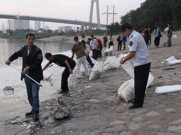 Trabalhadores removem peixes mortos de rio perto de Tianjin (Foto: Reuters)