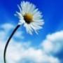 Papel de Parede: Lonely flower