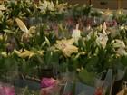 Tem início '8ª Edição do Festival das Flores de Holambra' em São Luís, MA