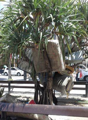 Árvore de colchões   (Foto: Cléo Dantas/VC no G1)