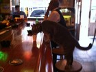 Barman serve copo de leite após gato se sentar em balcão de bar nos EUA