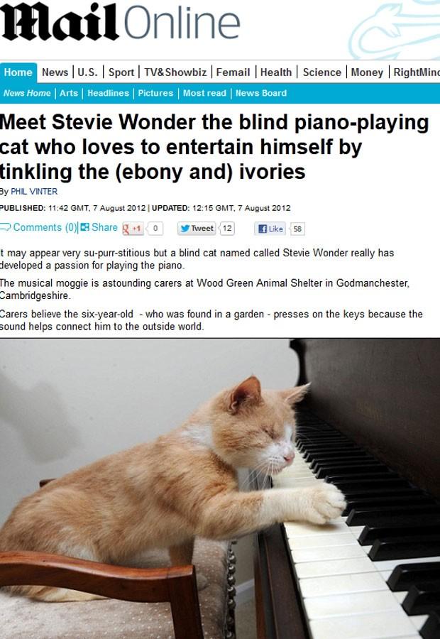 Gato foi encontrado em jardim já sem os dois olhos (Foto: Reprodução)