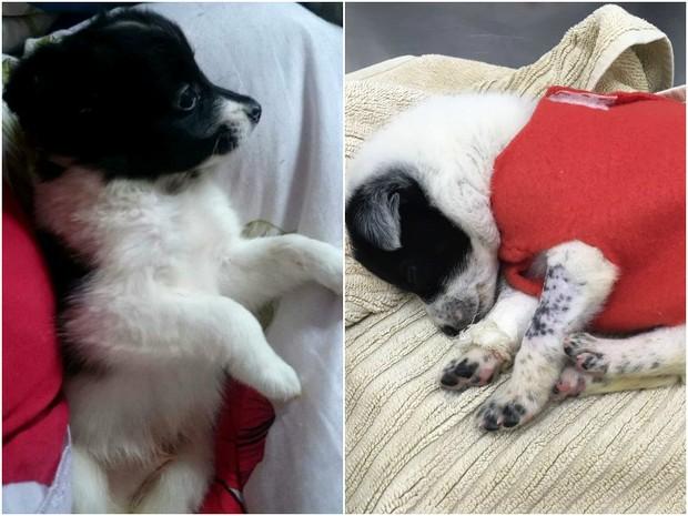 ONG afirma que animais sofreram maus tratos antes de venda (Foto: Divulgação/FAS)