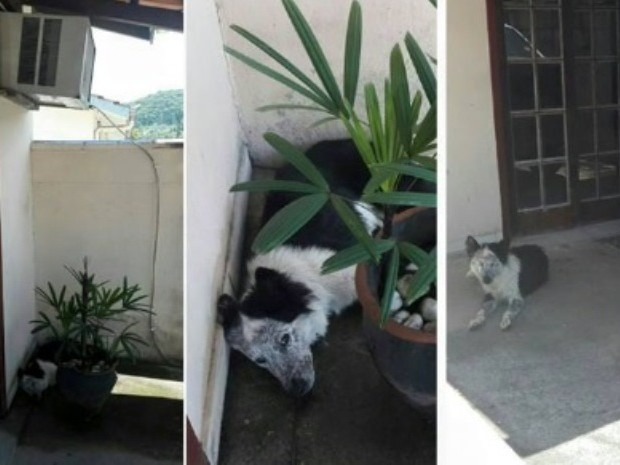 Cachorro foi encontrado em uma poça d'água formada na saída de um ar-condicionado (Foto:  Polícia Militar/Divulgação)