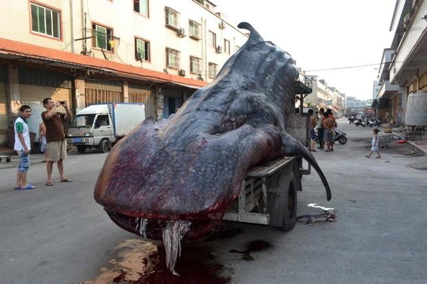 Pescadores chamaram a polícia após capturar animal, acreditando que se tratava de um 'monstro' (Foto: STR/AFP)