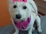 Animais de estimação fofos fazem sucesso na web; veja lista!