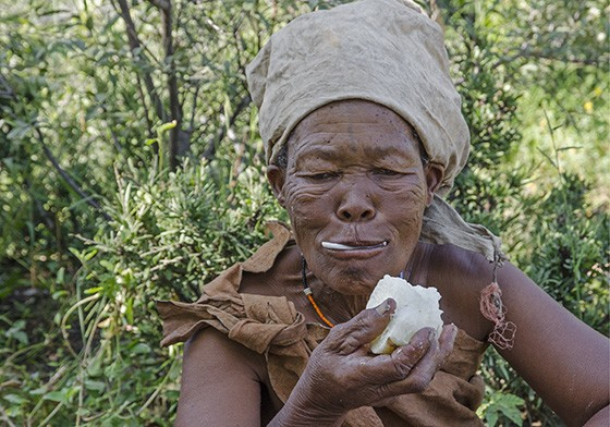 Qwaxo ficou com a parte mais gorda da kombrua e mastiga o tubérculo com vontade (Foto: © Haroldo Castro/ÉPOCA)