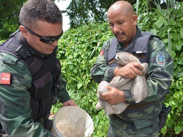 A Polícia Ambiental resgatou uma preguiça que estava na BR-230, em João Pessoa, neste sábado (29). Segundo os policiais, o animal foi levado para a mata do Jardim Botânico, onde é seu habitat natural. (Foto: Walter Papparazo/G1)