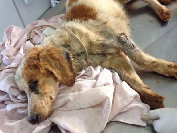 Cachorro foi levado para clínica vetenirária (Foto: Divulgação/Polícia Ambiental)