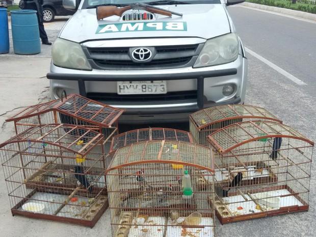 Pássaros e arma foram localizados durante operação (Foto: Divulgação/BPMA)