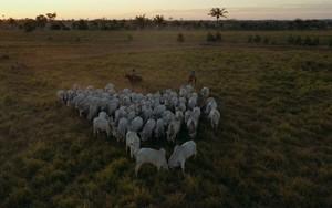 Preservação enfrenta desafio com aumento do agronegócio (Rede Globo)