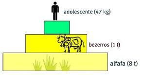 Pirâmide de biomassa comum (Foto: Reprodução / Colégio Qi)