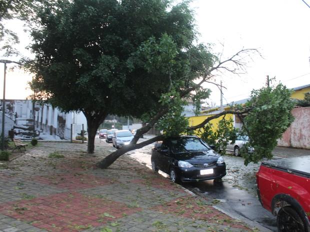 Árvore tombou sobre carro estacionado no Centro Artesanal Dona Nenê, em Guararema (Foto: José Antônio de Assis/ arquivo pessoal)