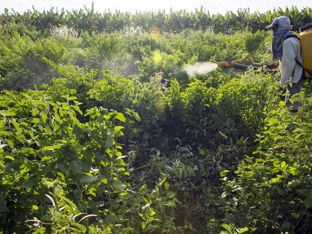 Trabalhador aplica inseticida em pequena plantação de Limoeiro do Norte, no Ceará, em janeiro deste ano. Uso excessivo de substâncias químicas contamina rios e reservatórios (Foto: Davi Pinheiro/Reuters)