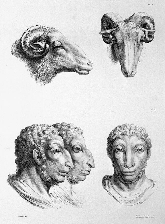 Carneiro (Foto: Reprodução/Charles Le Brun)