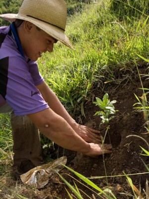 Produtores cercam áreas de nascentes e plantam mudas em Extrema, MG (Foto: Secretaria de Meio Ambiente de Extrema)