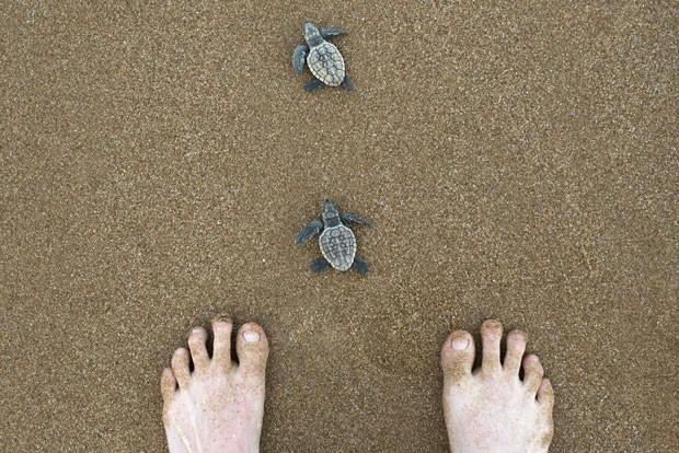 Filhotes de tartaruga fotografados por Lauren em uma de suas viagens (Foto: Lauren Bath/Divulgação)
