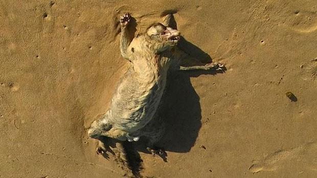 Iris Brusse se deparou com a carcaça de uma criatura estranha em uma praia de Sydney (Foto: Reprodução)