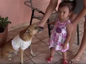 Caramelo e a pequena Emanueli. Rio Preto (Foto: Reprodução/TV TEM)