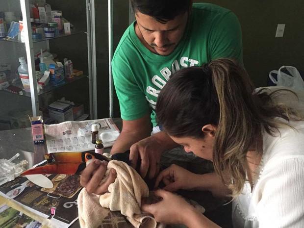 Veterinários examinam tucano achado com bico quebrado no jardim de casa do DF (Foto: Gabriella Terra/Arquivo Pessoal)