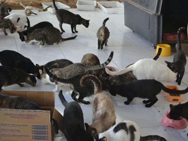ONG Proteger tem atualmente 80 gatos (Foto: Divulgação/ONG Proteger)
