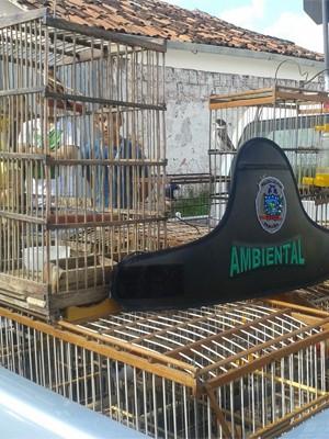 Mais de 40 aves foram apreendidas (Foto: Divulgação/Polícia Ambiental)