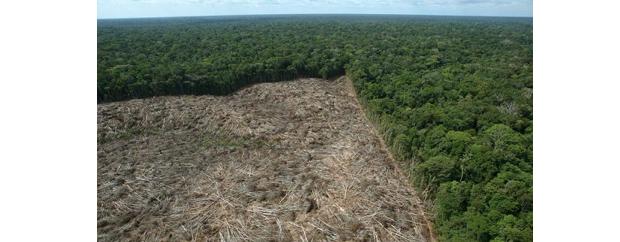 Desmatamento da Mata Atlântica (Foto: Cultura Mix)