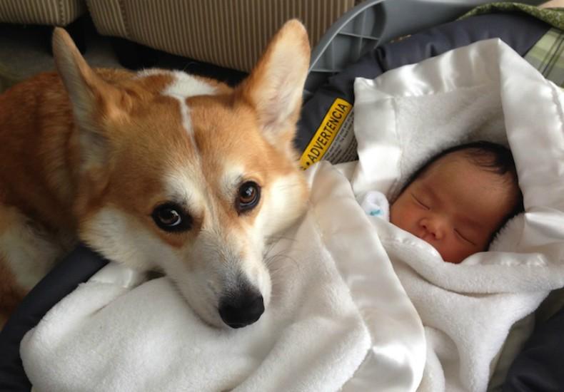 Cachorro ajuda pais inexperientes a cuidar de bebê (Foto: Chris Lowe)