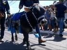 Cavalgada em Araguaína tem miniboi e protesto contra violência sexual