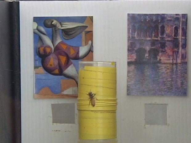 Estudo mostrou que abelhas são capazes de identificar o estilo de cada artista (Foto: Reprodução/BBC)
