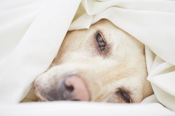 Cachorro com depressão  (Foto: thinkstockphotos)