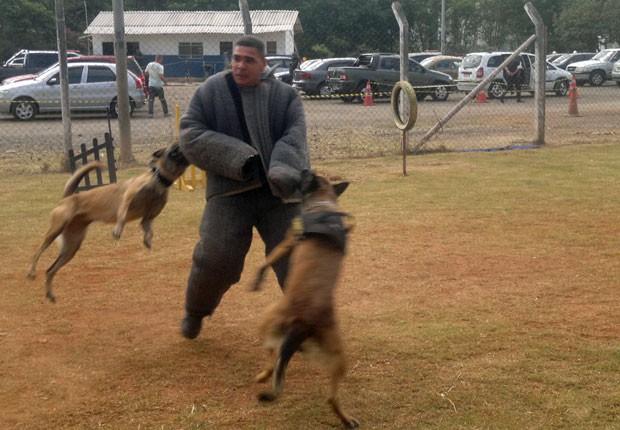 Parte do treinamento dos cães envolve simulação de situações de risco, como assaltos e fugas de presídios (Foto: Rosanne D'Agostino/G1)