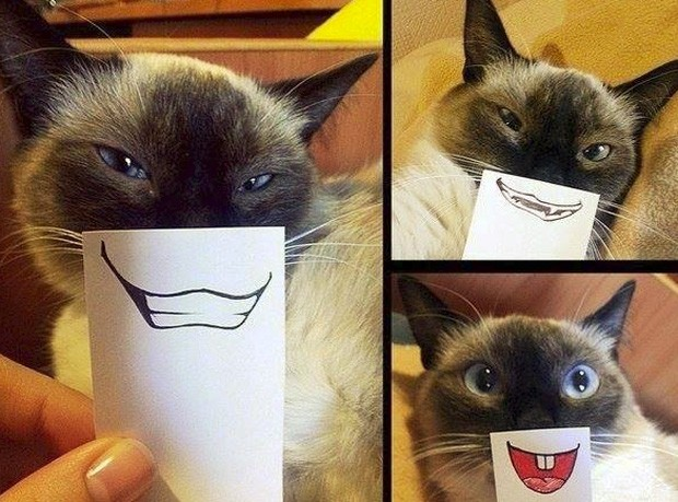 g1 gatos ganham máscaras de caretas e brincadeira vira sensação