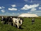 Produção de biogás deve 'zerar' conta de energia de Entre Rios do Oeste