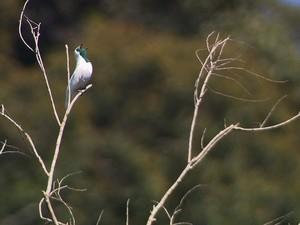 biodiversidade duas barras (Foto: Devanir Gino/TG)