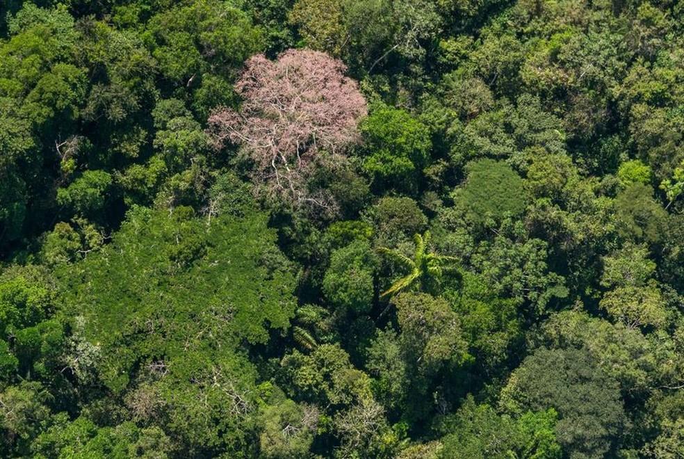 Concessão permite à gestão o gerenciamento do patrimônio florestal no combate à grilagem de terras (Foto: Zig Koch/WWF Brasil)