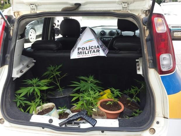 Maconha (Foto: Polícia Militar/ Divulgação)