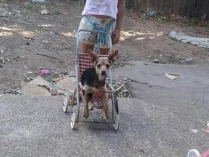 Cachorra de oito meses foi levada de casa em São Carlos (Foto: Arquivo Pessoal )