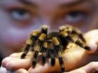 Zoológico de Londres dá início ao tradicional censo de animais