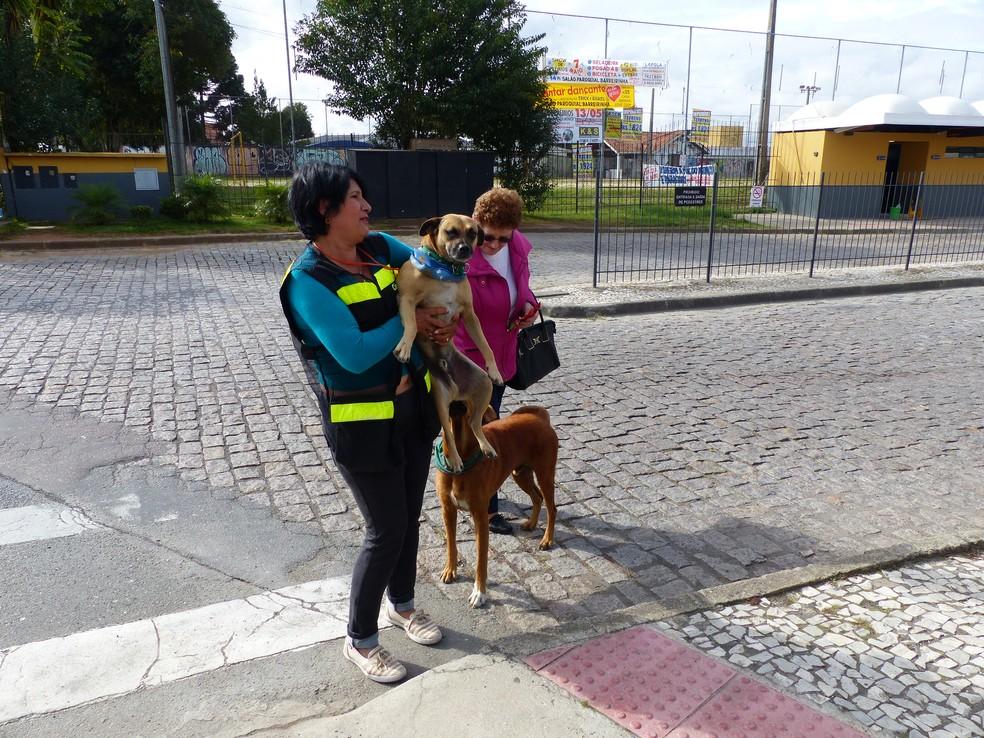 Cães também recebem o carinho de funcionários e de passageiros do terminal  (Foto: Adriana Justi/G1)