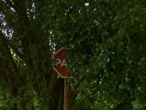 Placa está escondida atrás de galhos (Foto: Rodrigo Sargaço/EPTV)