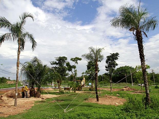 Outras 181 árvores ainda devem ser replantadas em Cuiabá. (Foto: Edson Rodrigues/Secopa)